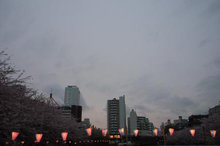20060405_1.jpg