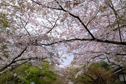 20060416ishigami02.jpg