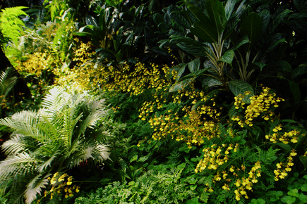 20060512_orchidgarden.jpg