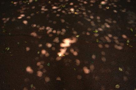 20060715_komore.jpg