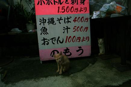 20060807_neko.jpg