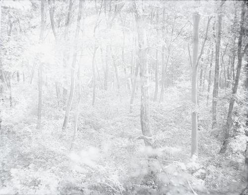 brightforest.jpg